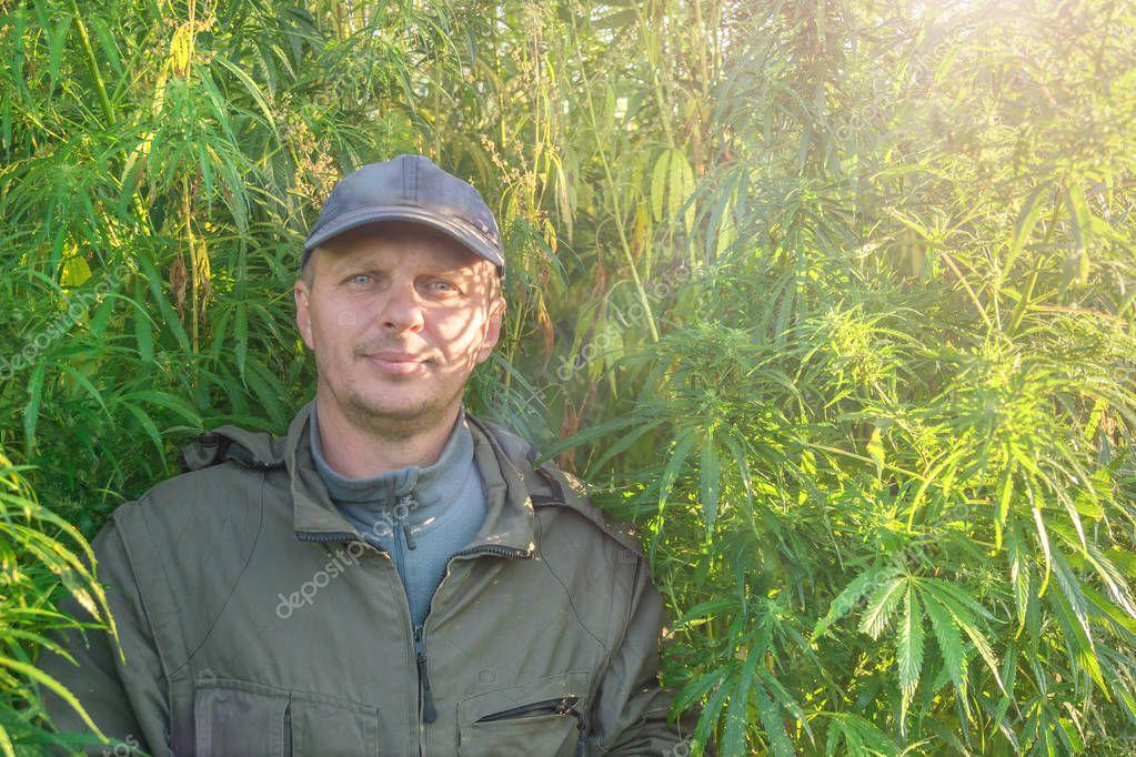 Adult man in a cap on a hemp field