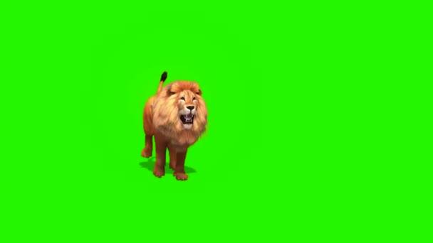 3D lev běží na zelené obrazovce