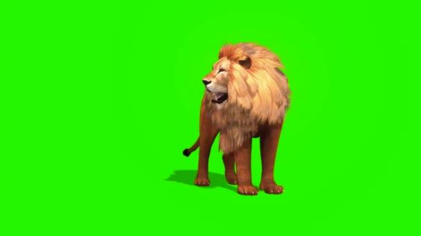 Lví řev na zelené obrazovce