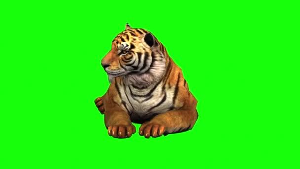 Tygr sedí na zelené obrazovce