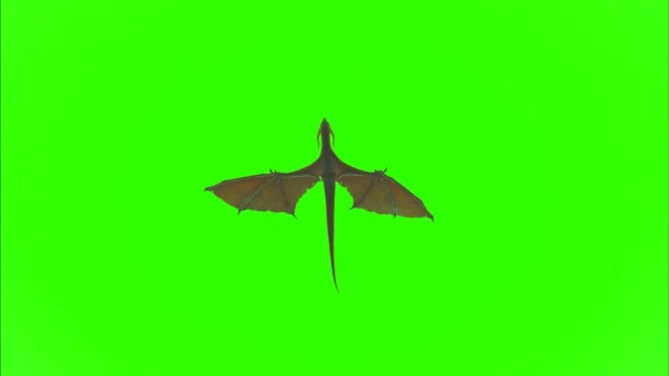 Dračí létání na zelené obrazovce