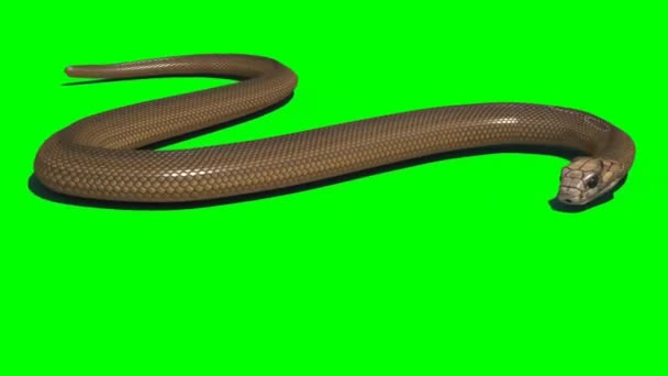 Kígyó mászás a zöld képernyőn