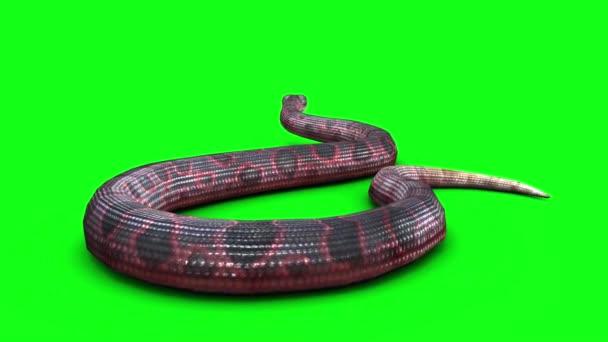 Kígyó keres zöld képernyőn