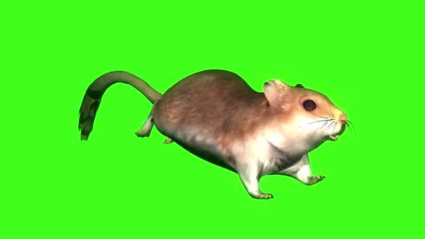 Maus läuft auf grünem Bildschirm