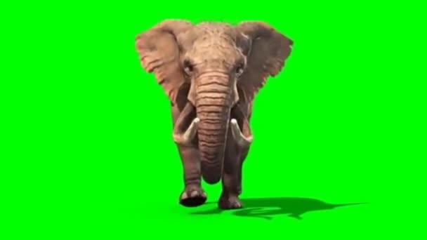 Elefántfutás zöld képernyőn