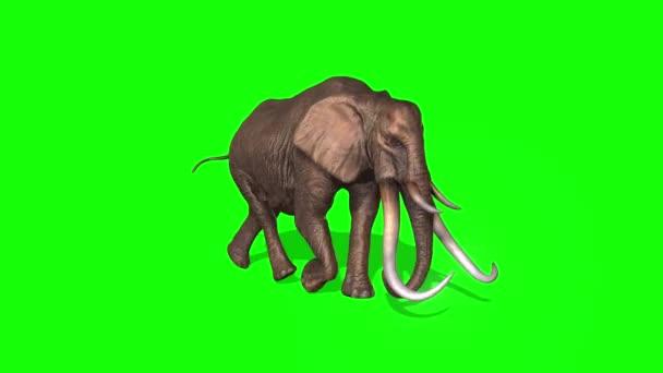 Slon běží na zelené obrazovce