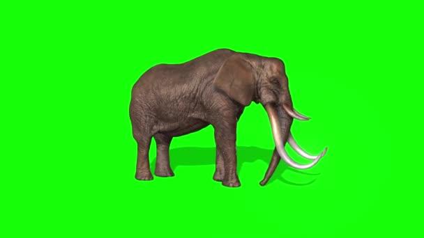 Sloní postřik vody na zelené obrazovce