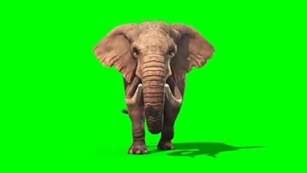 Elefánt séta a zöld képernyőn