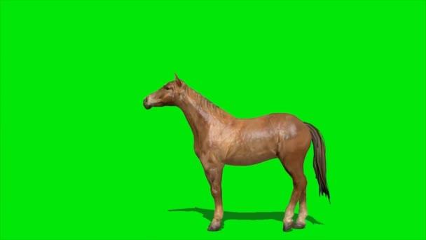 Kůň stojící na zelené obrazovce