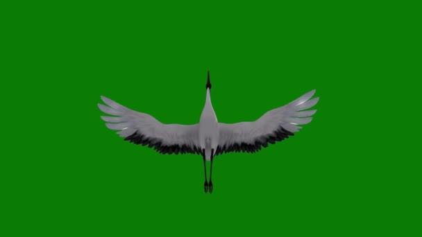 Daru repül a zöld képernyőn