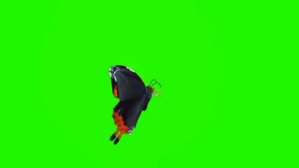 Pillangó ül a zöld képernyőn