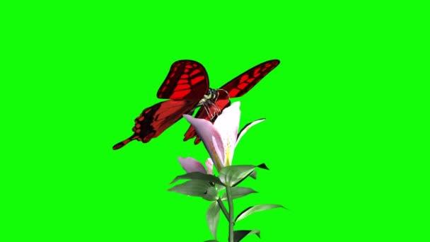 Motýl sedí na zelené obrazovce