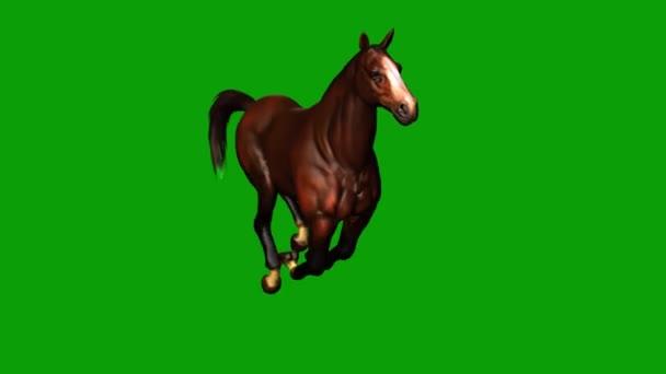 Horse Running on Green Screen