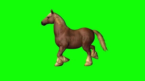 Kůň běží na zelené obrazovce