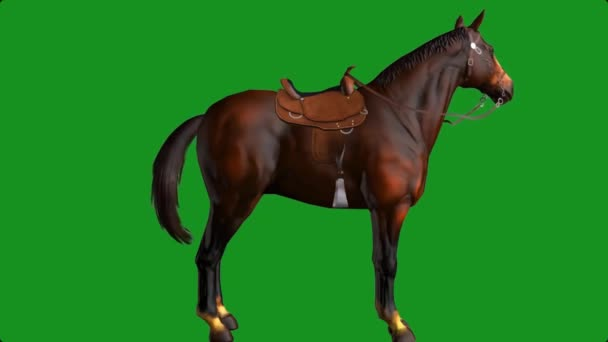 Horse Looking on Green Screen