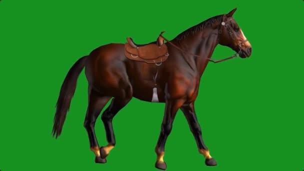Horse Walking on Green Screen