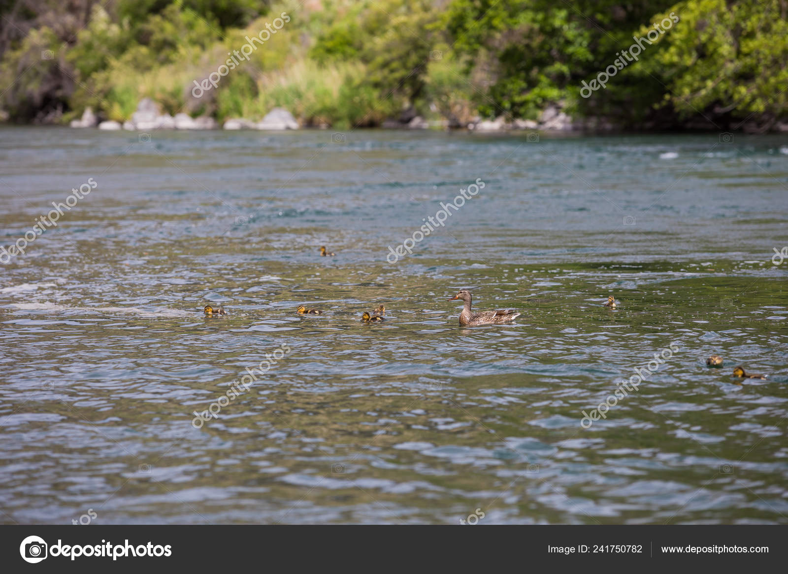 Lower Deschutes River Oregon Fly Fishing Trip in May — Stock Photo