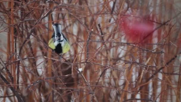 Video ptáků