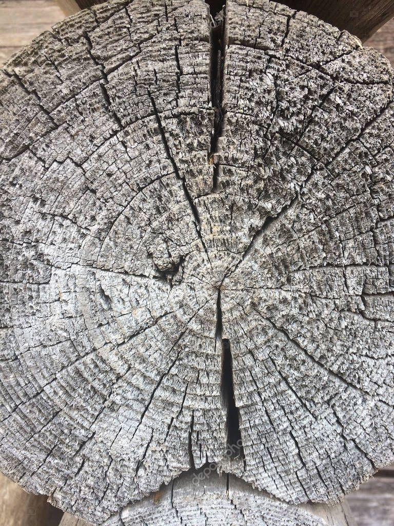 Tree rings old weathered wood texture with the cross section of a cut log