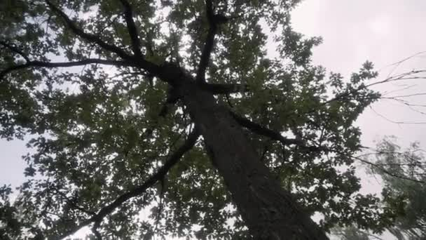 fa korona a háttérben. Felhőtlen időjárás eső után