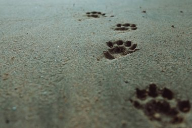 Some dog footprints on the sand of the beach with copy space
