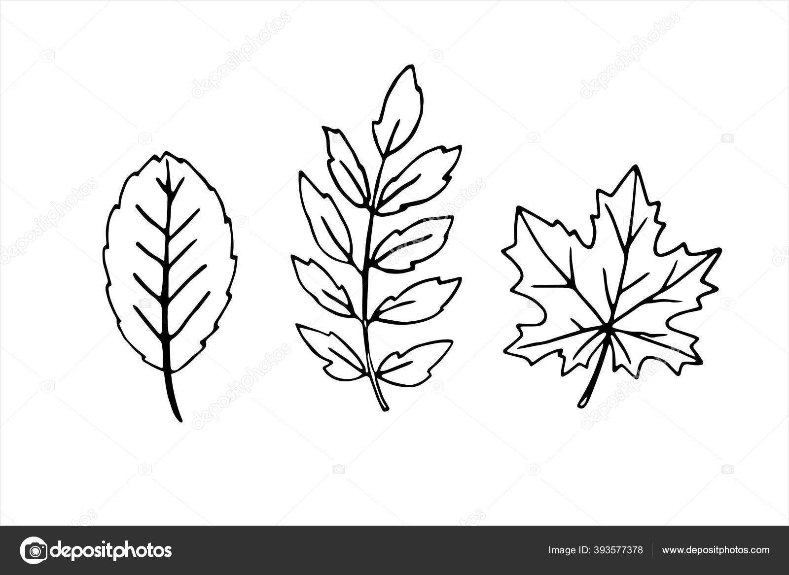 Gambar Daun Hitam Putih Vector Tips Dan Trik Pertanian