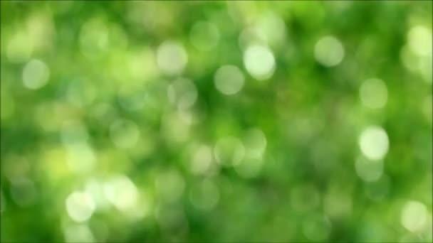 Příroda abstraktní rozmazané zářivě zelené listy nebo listy stromů v mírném větru a slunečním svitu
