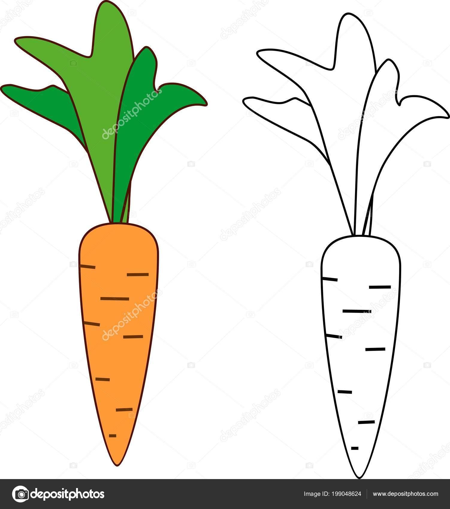 Imágenes: una zanahoria para colorear | Zanahoria Dibujos Animados