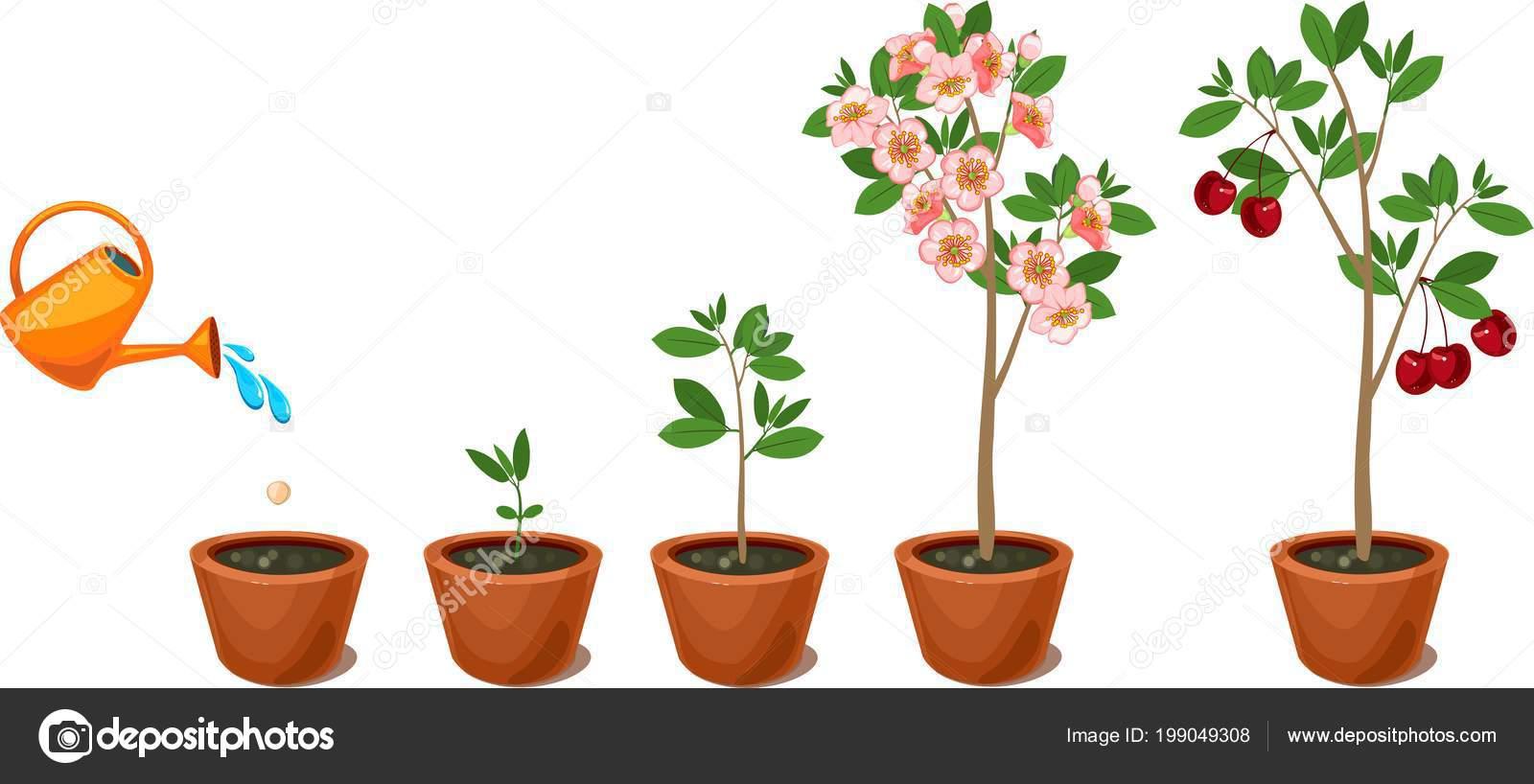 planten groeien
