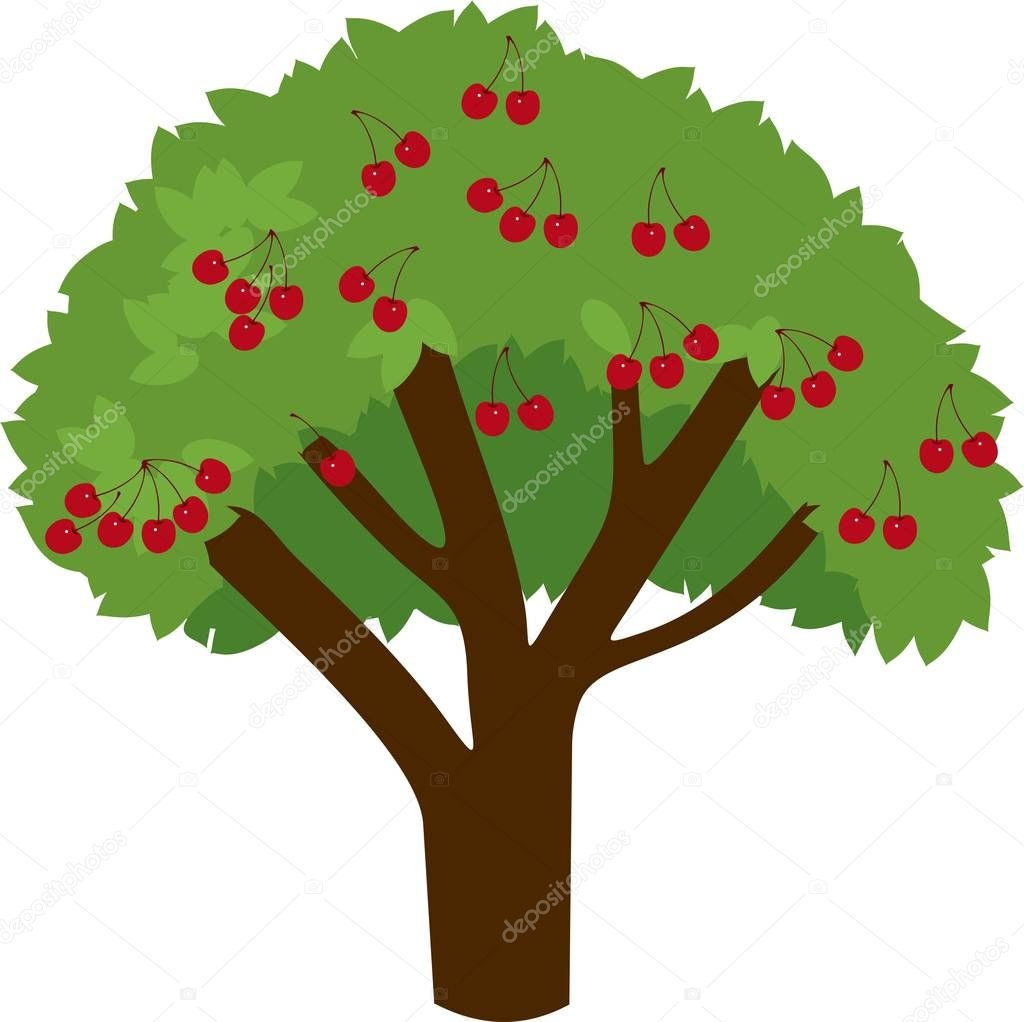 Cherry tree with ripe cherries and green leaves on white background