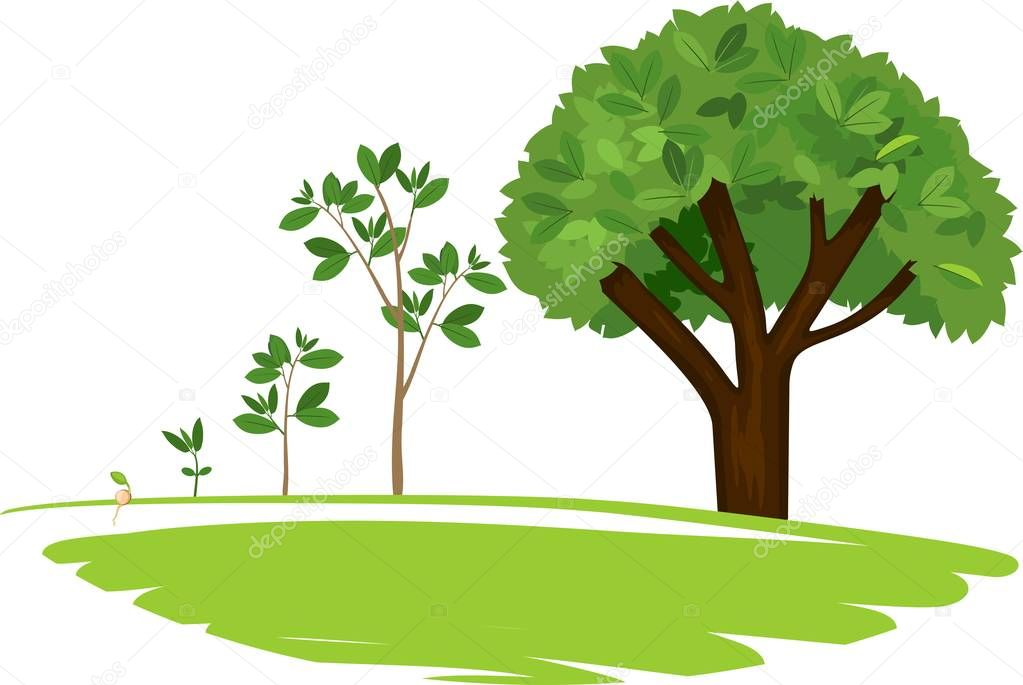 Stages of growth of a tree from a seed. Life cycle of a tree: from seed to large tree