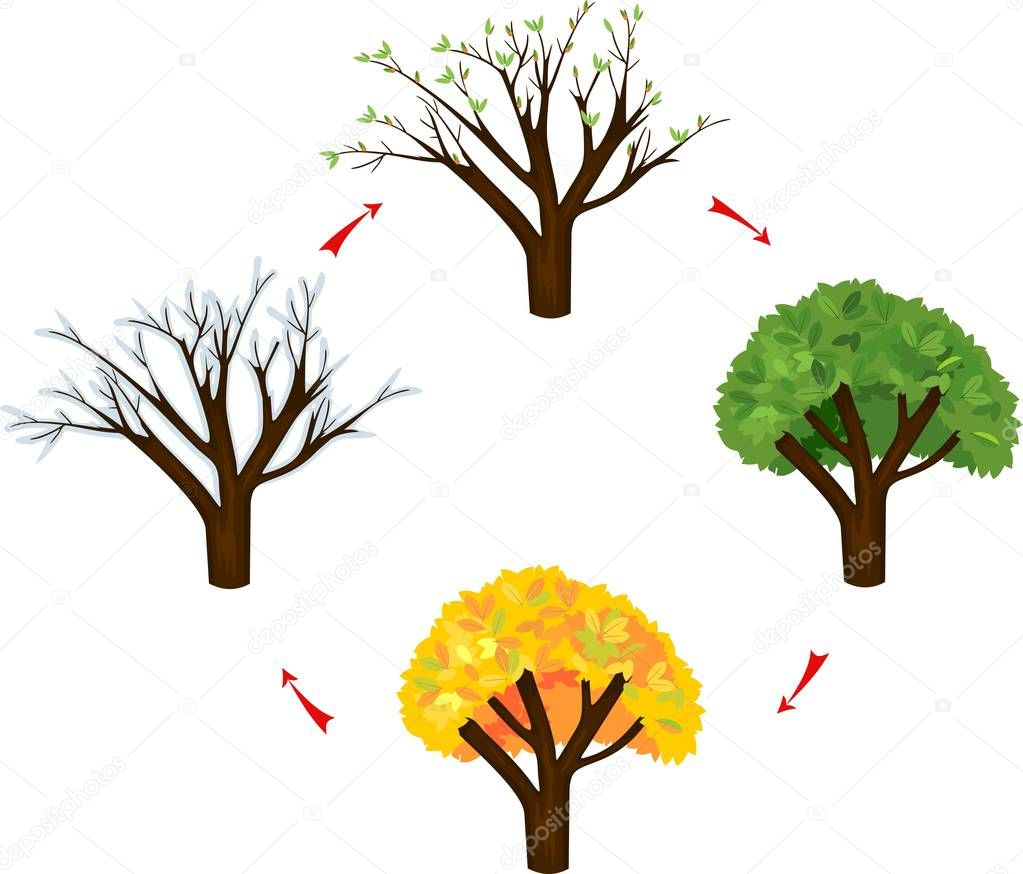 Four seasons trees on white background. Life cycle of tree