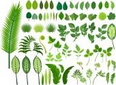 Fotografie Eingestellt von grünen Blättern in verschiedenen Formen und Größen auf weißem Hintergrund