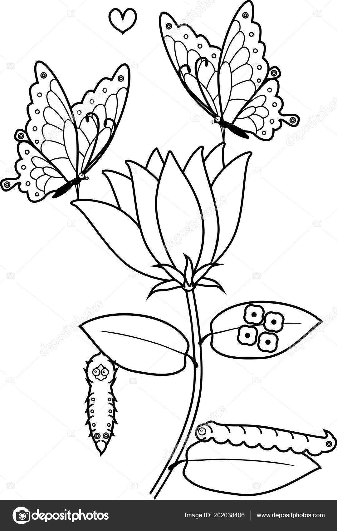 Coloring Page Life Cycle Butterfly Flower Vector Image By C Mariaflaya Vector Stock 202038406