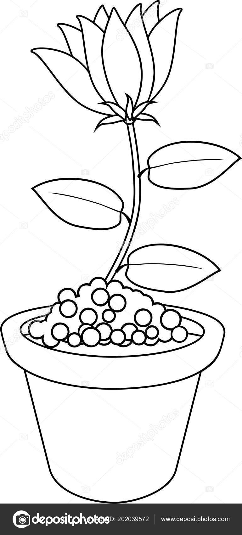 Coloriage Fleur Pot.Coloriage Fleurs Pot Fleurs Image Vectorielle Mariaflaya C 202039572