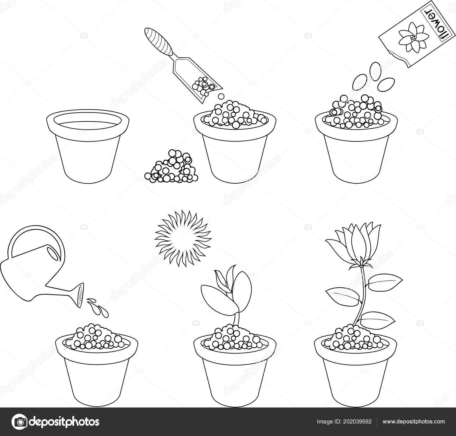 Boyama Sayfası Altı Kolay Adımda çiçek Bitki Hakkında Talimatlar