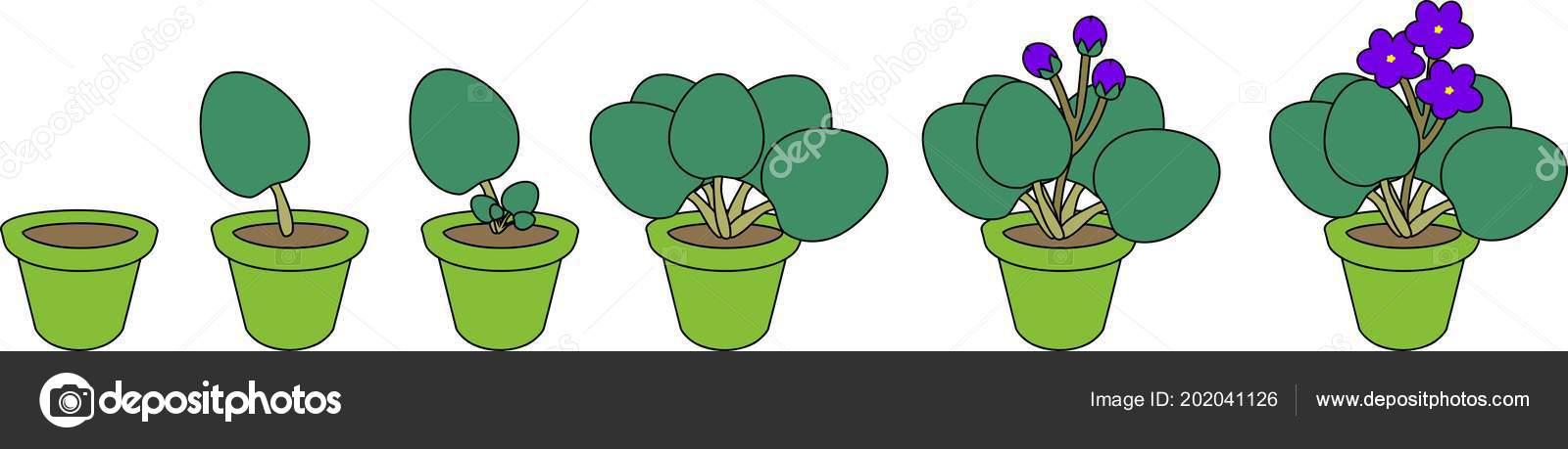 vegetativa propagation Multiplicacion asexual