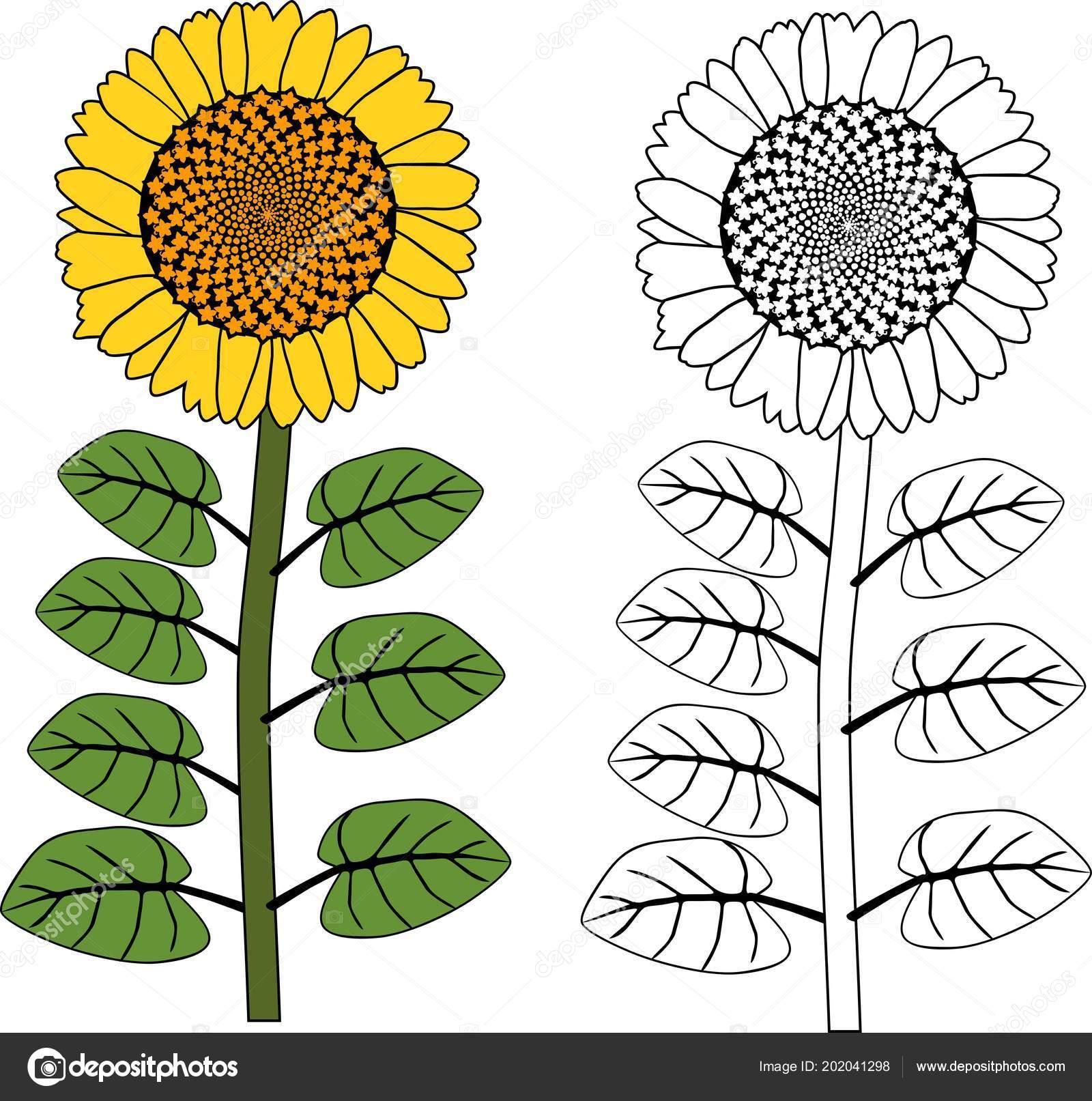 Kleurplaten Zonnebloemen.Kleurplaat Zonnebloem Plant Met Gele Bloemen Bladeren Stockvector