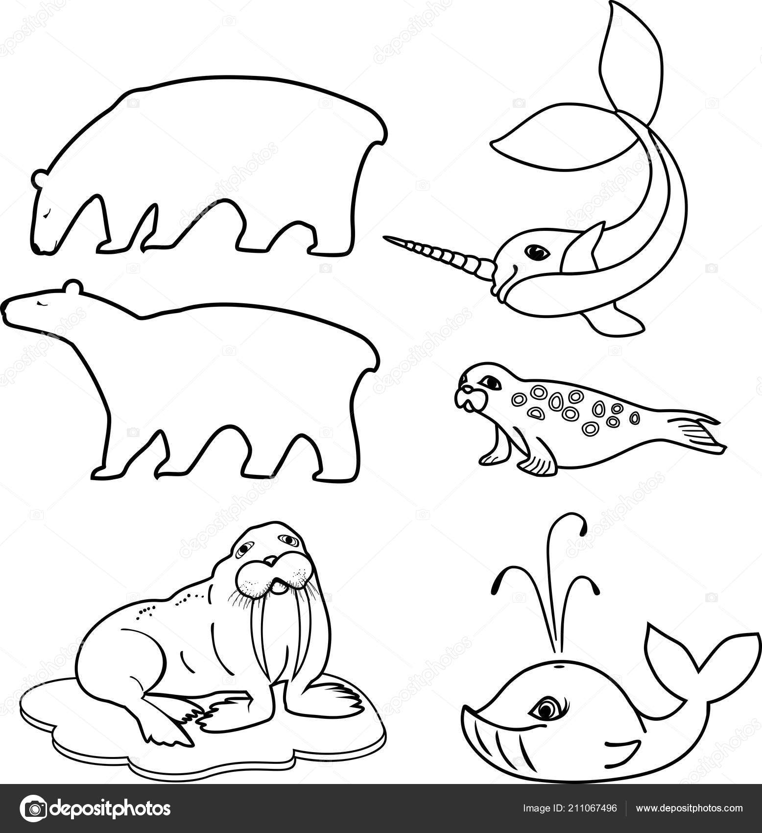 Coloring Page Set Different Cartoon Animals Polar Fauna Stock