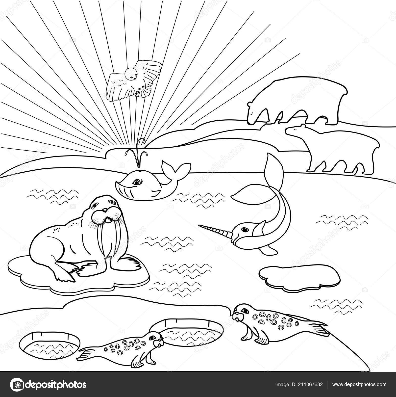 Boyama Sayfası Farklı Kutup Hayvanları Ile Kuzey Manzara Stok