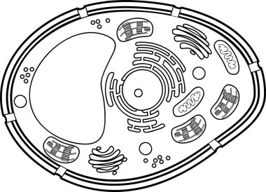 Coloring page. Plant cell structure