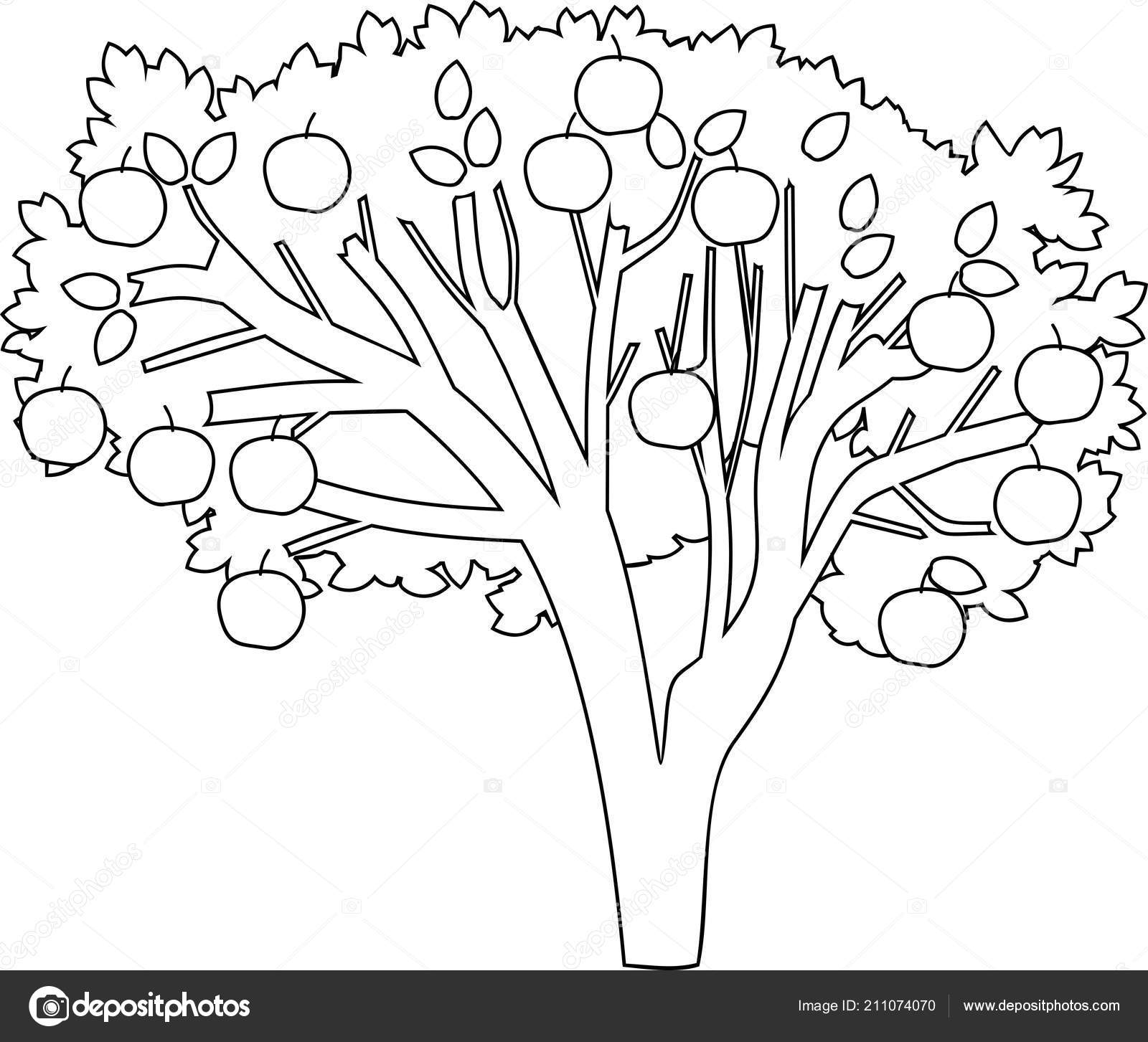 Apple Tree Coloring Page Stock Vector C Mariaflaya 211074070