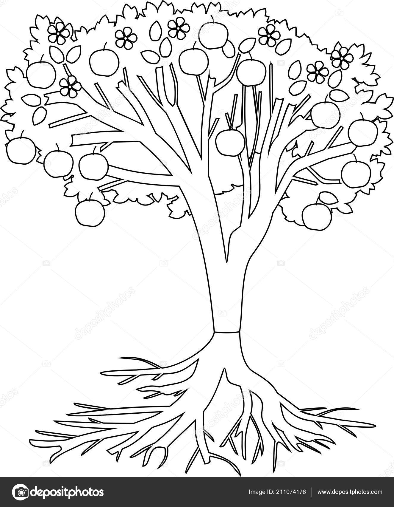 Coloring Page Apple Tree Root System Fruits Stock Vector C Mariaflaya 211074176
