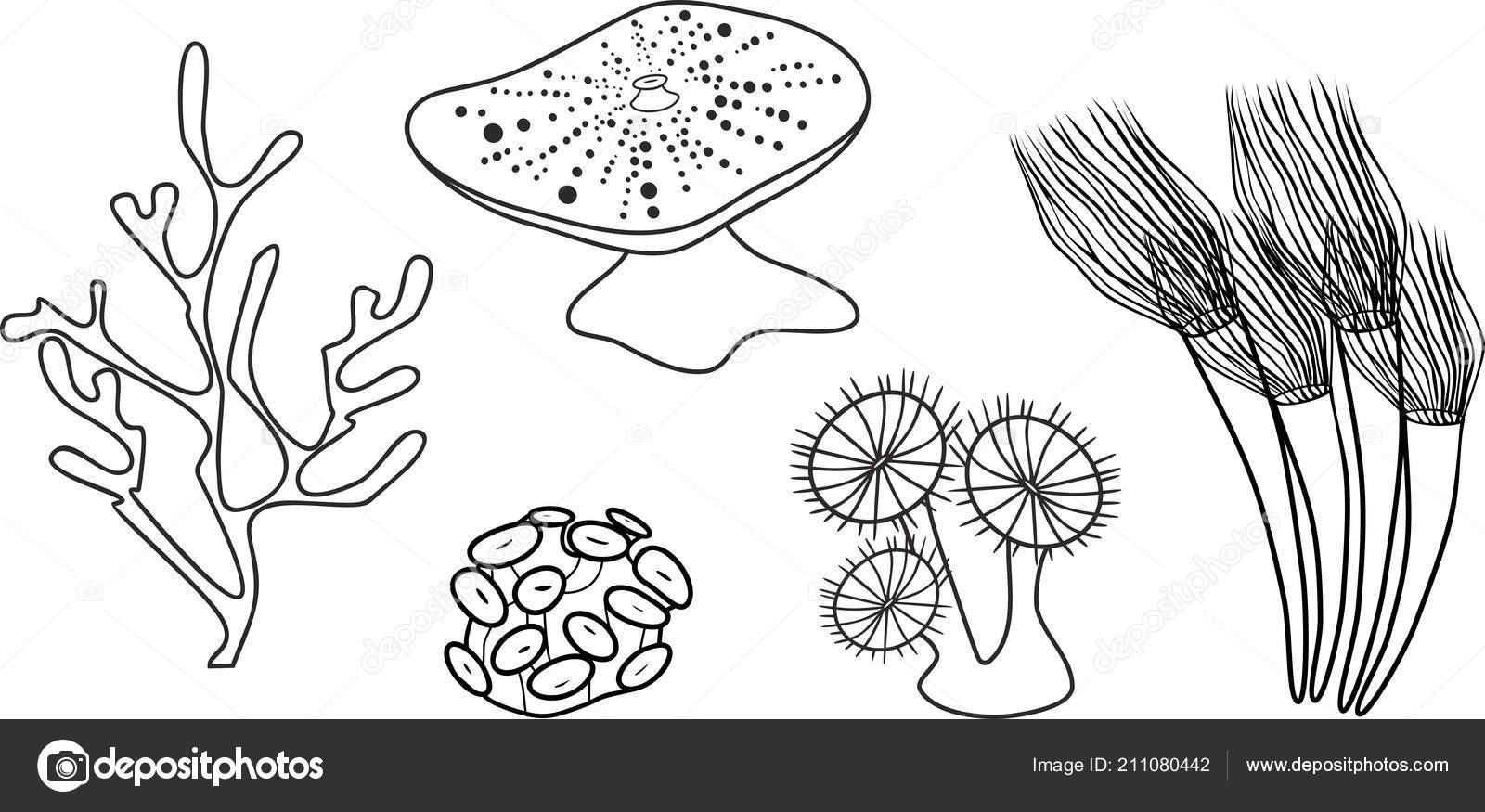 Coloring Page Different Corals Stock Vector C Mariaflaya 211080442
