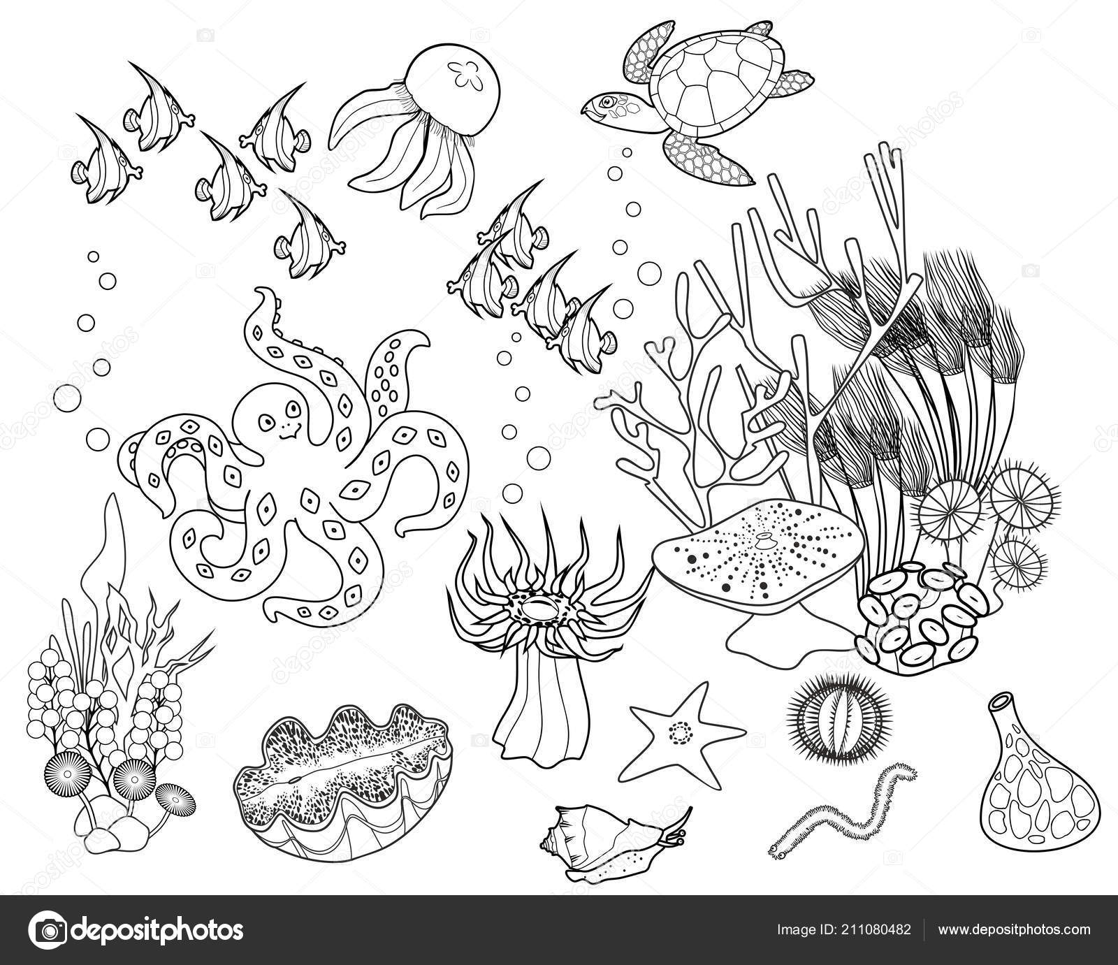 Anchor in coral reef adult coloring page Vector Image | 1381x1600