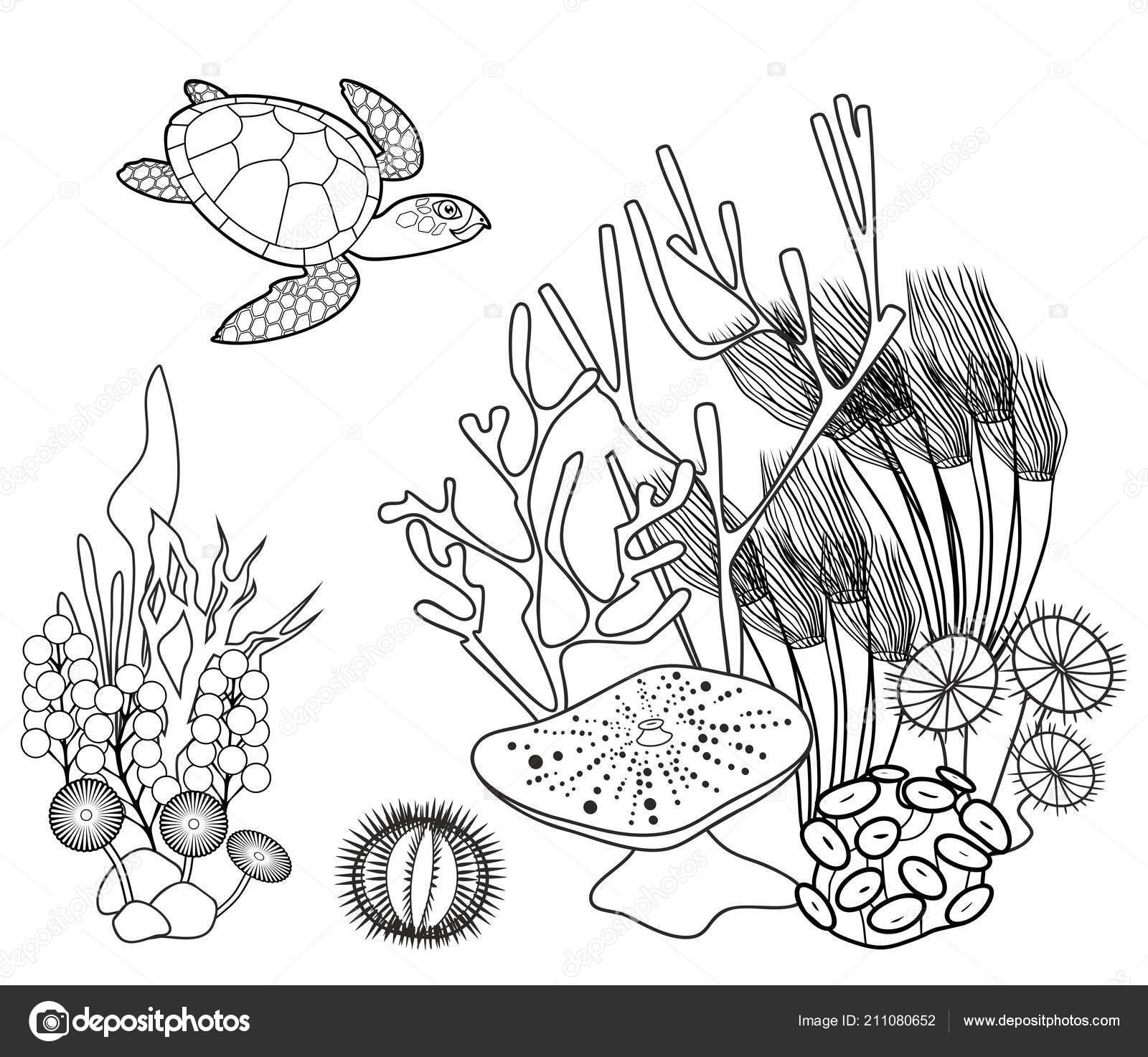 Boyama Sayfası Mercan Kaplumbağa Diğer Deniz Hayvanları Stok