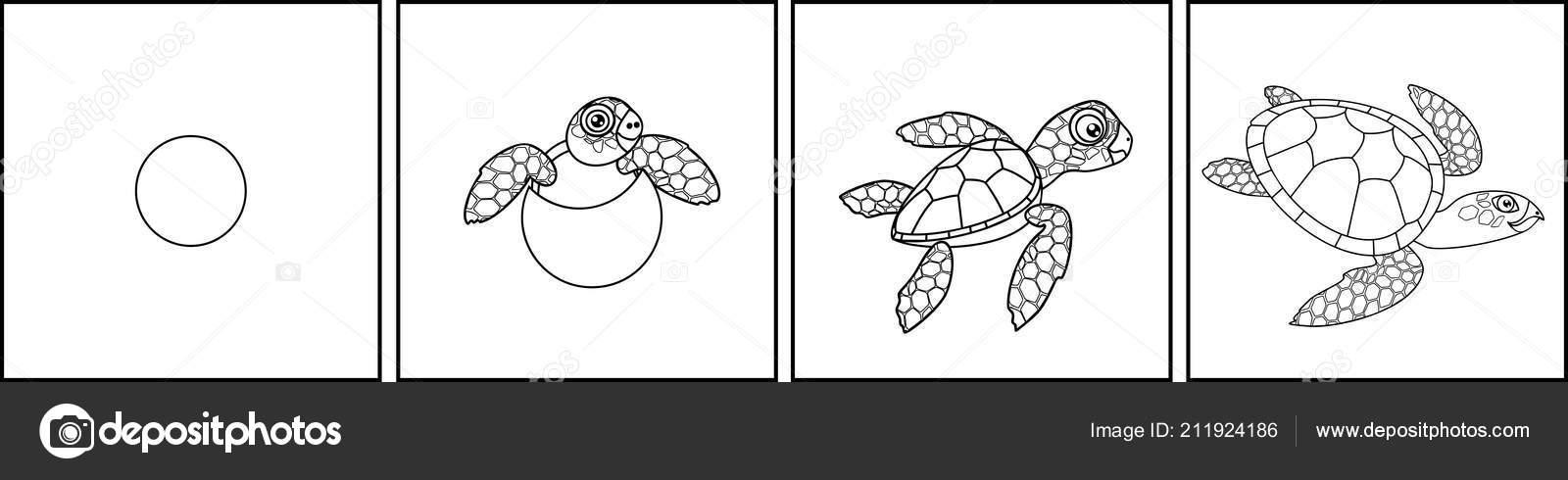Página Para Colorear Ciclo Vida Las Tortugas Marinas — Vector de ...