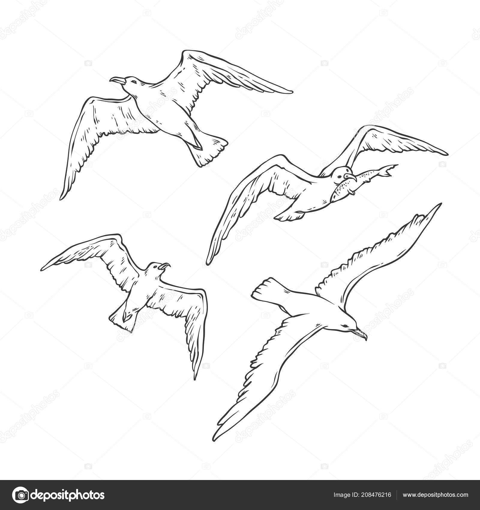 vector skizze festgelegt fliegende möwen vogel möwe