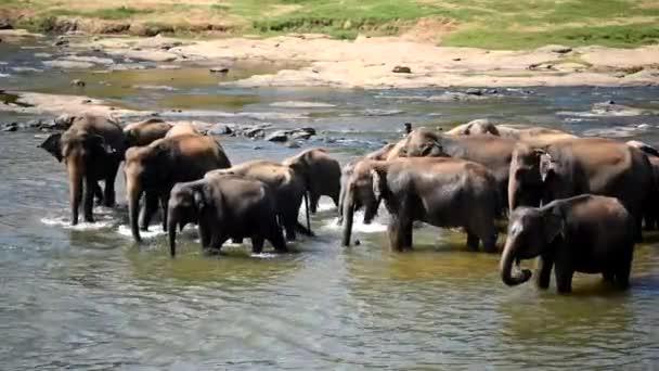 a folyó pancsoló elefántok