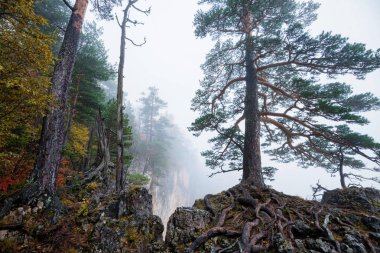 Fantasy foggy forest trees in the mountains